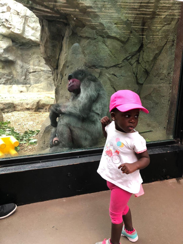 ISK Zoo
